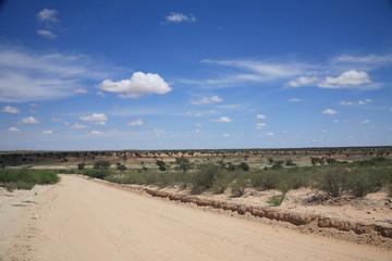 pianure della savana e desertiche kgalagadi kalahari sudafrica