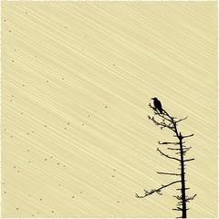 Crow on the tree