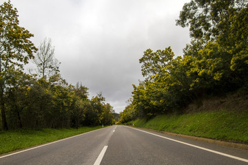 View of an long asphalt road with mimosa trees.