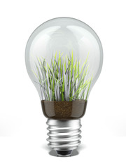 bulb with grass inside