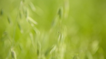 Through the Grass. HD 1080.