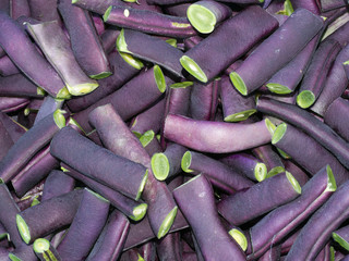 Purple French beans Phaseolus vulgaris - cut for cooking. Summer