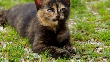 Black kitten on the green grass, goes away after a while