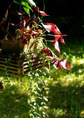 Nice plant in hanging pot in garden