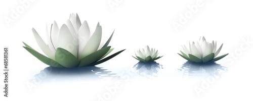 Leinwanddruck Bild Lotusblüten