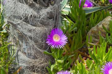 Цветы на набережной