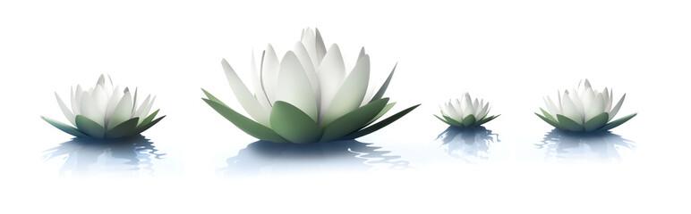 Lotusblüten 2
