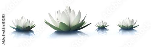 Leinwanddruck Bild Lotusblüten 2