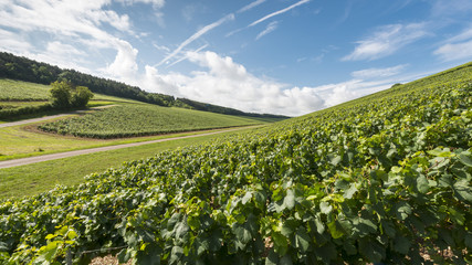Burgundy landscape- wineyard