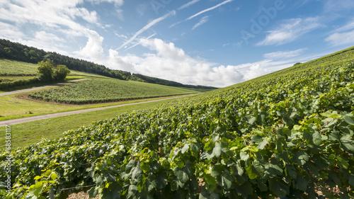 Papiers peints Culture Burgundy landscape- wineyard