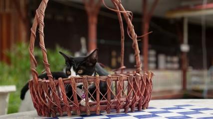 Cute Little Kitten Sitting in Basket.
