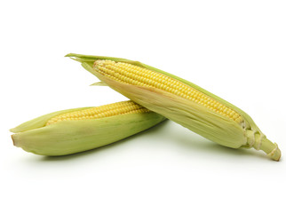 Ears of corn isolated
