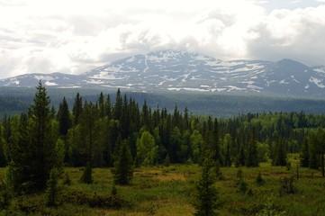Fjällnära skog, Åreskutan