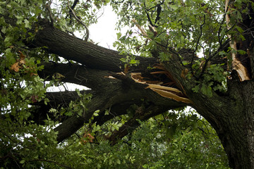 Storm Damage Large Branch