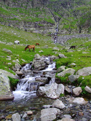 Wild horses in the mountains 2