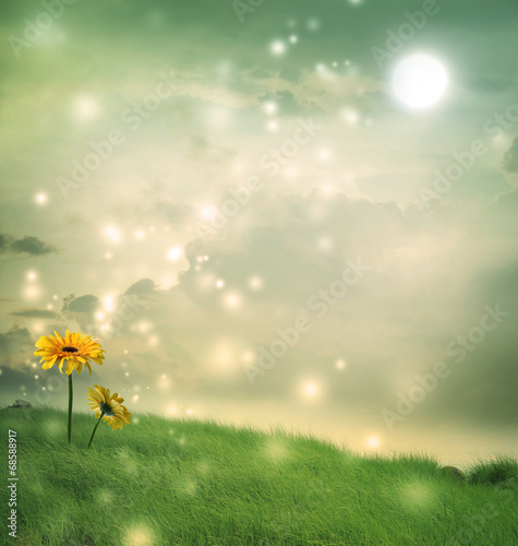 Fotobehang Gerbera Gerberas in a fantasy hill under the moon