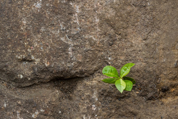 Small green plant growing between stones.