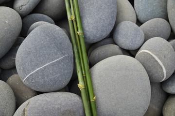 set of bamboo grove on gray stones