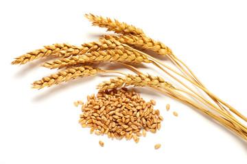 Wheat ears and seed