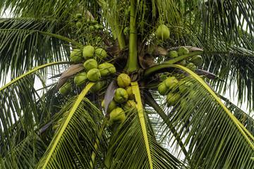 Wet Coconut Tree