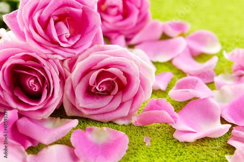 pink rose and petals on green towel © naluwan