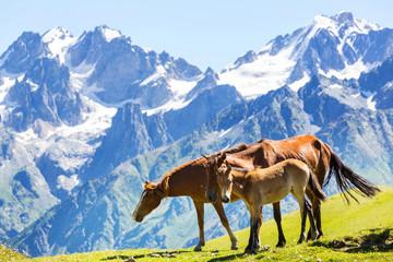 fototapeta koń w górach