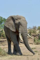 Kenia-Elefant-19584