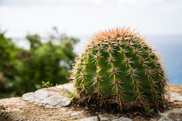 Barrel Cactus with Sea in Background