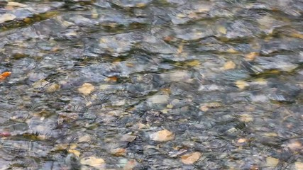 surface of a flowing creek