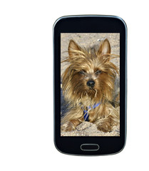 Smart-phote screen with lovely dog