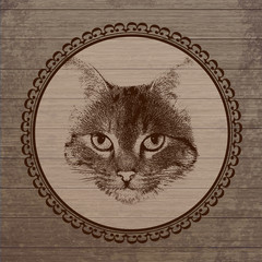 Cat portrait on wooden background