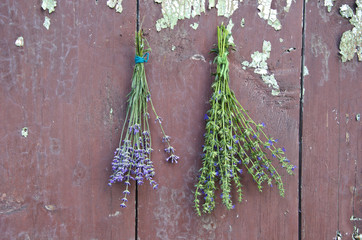medical herbs lavender and hyssop (Hyssopus officinalis)
