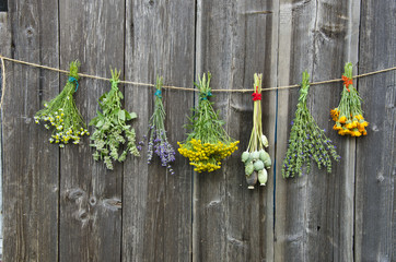 medical herbs flowers bunch collection on old wooden wall