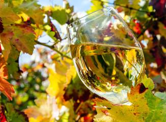 Weißwein zwischen den Reben genießen :)