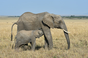 Kenia-Elefant-19986