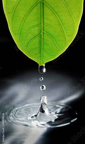 krople-wody-z-zielonych-lisci