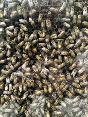 api nell'arnia
