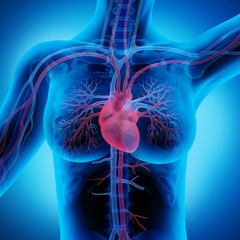 Frau mit Herz-Kreislauf