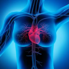 Frau mit Herz-Kreislauf 2