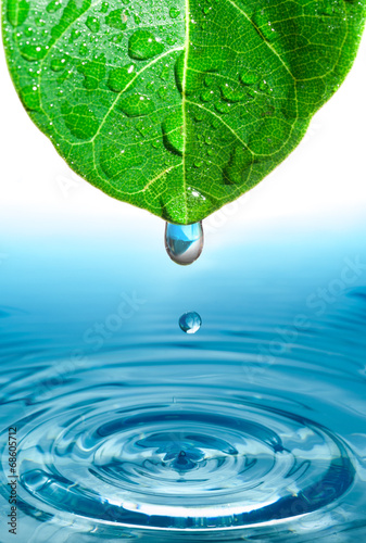 Poster Water planten green leaf with water drop ans splash isolated o white