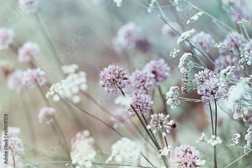 The Wild Garden - 68608156