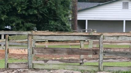 Horse Runs Around In A Wood Pen