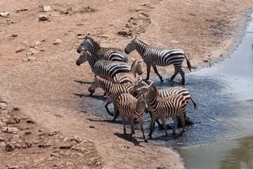Zebre al lago nello TSAVO EST