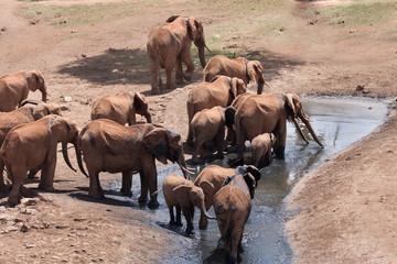 Branco di elefanti che bevono
