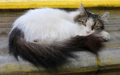 fluffy cat photo