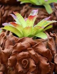 bright green macro Bromeliad
