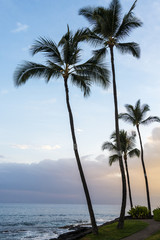 Palm trees in sunset in Kailua Kona downtown