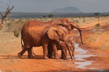 Famiglia di elefanti si bagnano nel fango rosso
