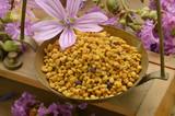 Beekeeping Apicoltura Apiculture Pszczelarstwo Apicultura