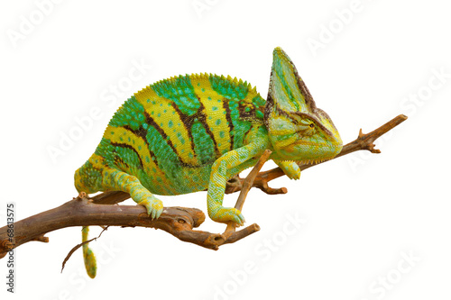 Foto op Plexiglas Kameleon chameleon